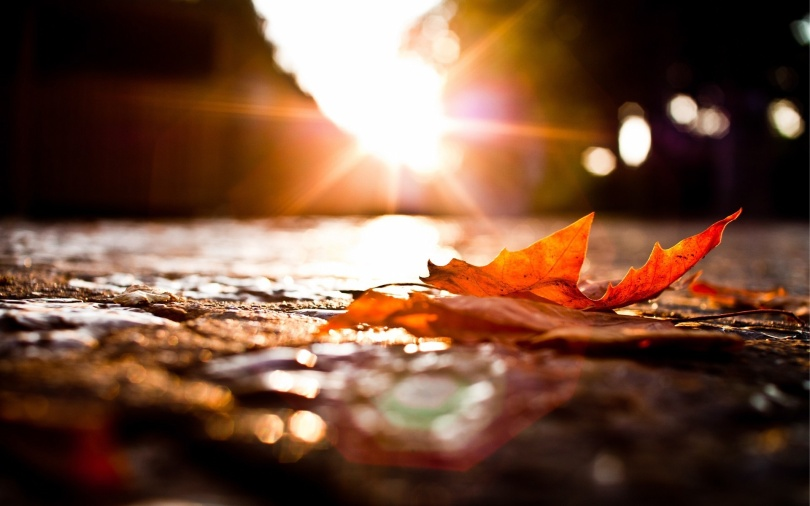 6961400-autumn-leaves-sunset.jpg